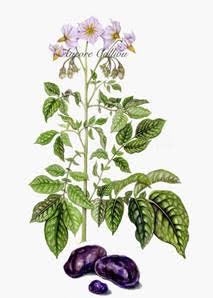 Atelier d'illustration botanique: Comptines des fleurs et du jardin