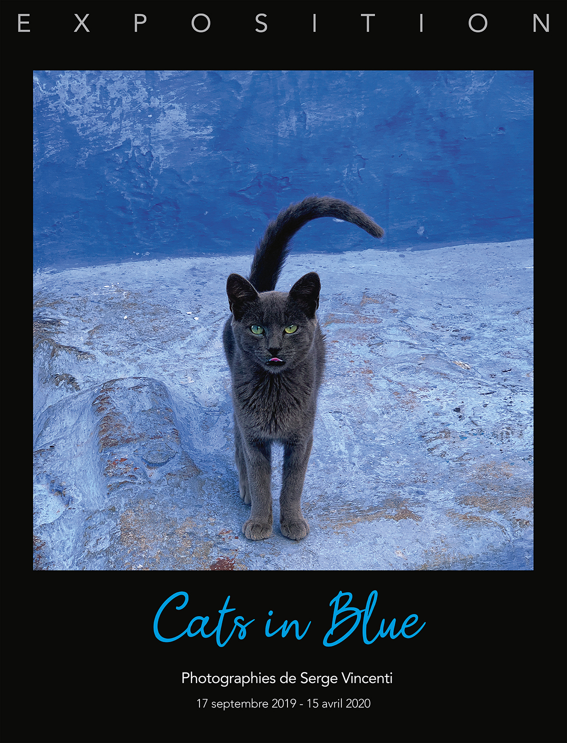 Exposition photographique Cats in Blue