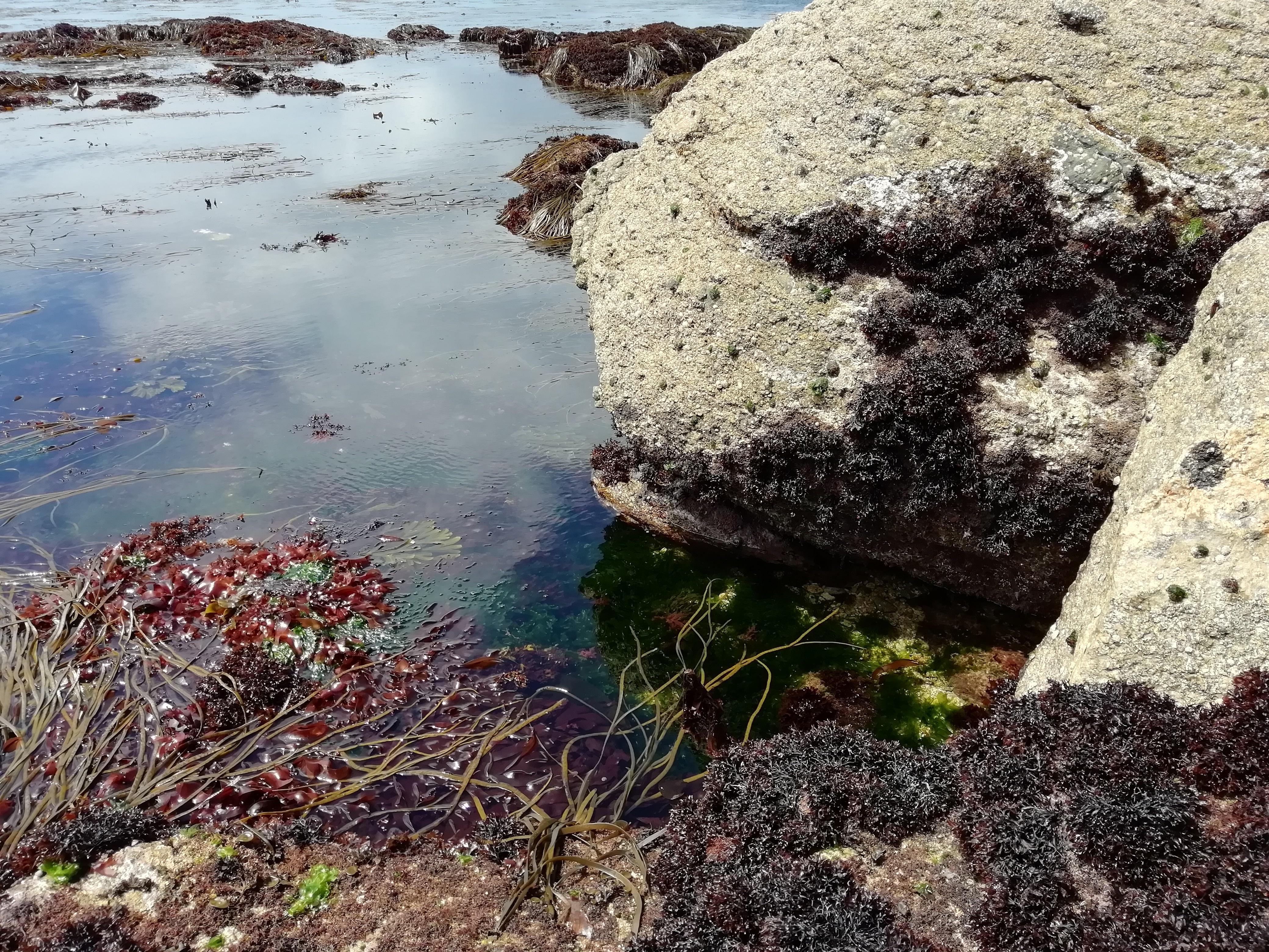 Sortie récolte et dégustation d'algues