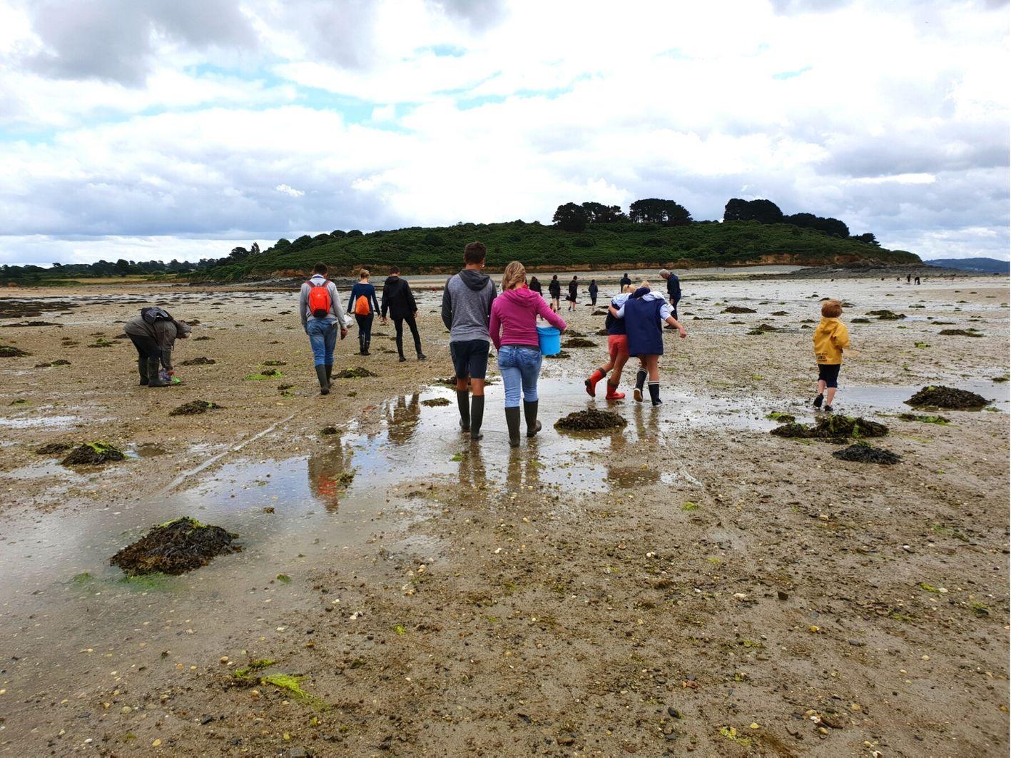 les secrets de la marée basse : coquillages et crustacés